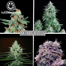 MIX FRUIT Nasiona marihuany