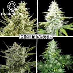 Mix indoor nasiona marihuany